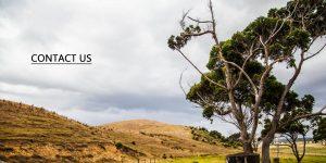Contact Icewood Ancient Kauri